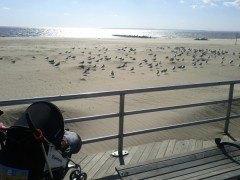 Coney Island New York in CityKinder Blog CityPortraits