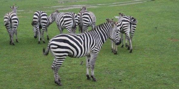 Six Flags Safari Adventure Park New Jersey in CityKinder German Blog CityErleben Article