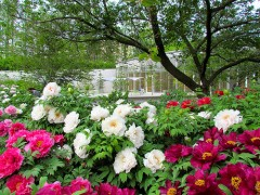Fruehling im Prospect Park